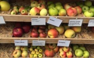 Alte Obstsorten -werden sie durch Clubsorten verdrängt?